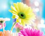 Obrázek - Úchvatná květina