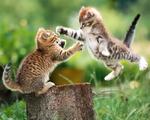 Obrázek - Koťata