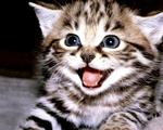 Obrázek - Koťátko