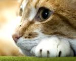 Obrázek - Kotě