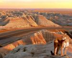 Obrázek - Puma