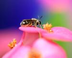 Obrázek - Včelka
