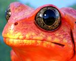 Obrázek - Žabka