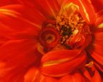 Obrázek - Květinka