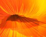 Obrázek - Květina