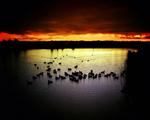 Obrázek - Jezero při západu slunce