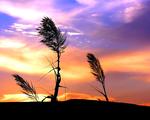 Obrázek - Západ slunce