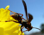 Obrázek - Start vosy z květu rostliny