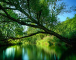 Obrázek na plochu - Romantická dovolená v přírodě