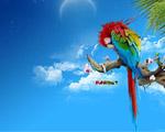Obrázek - Zasněný pestrobarevný papoušek