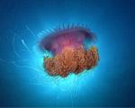 Obrázek - Podmořský svět a medúza
