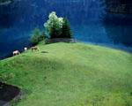 Obrázek - Pastviny pro koně