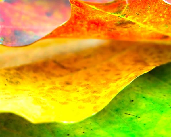 Obrázek na plochu v rozlišení 1280 x 1024 - Podzimní listí