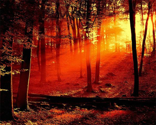Obrázek na plochu v rozlišení 1280 x 1024 - Rudý les
