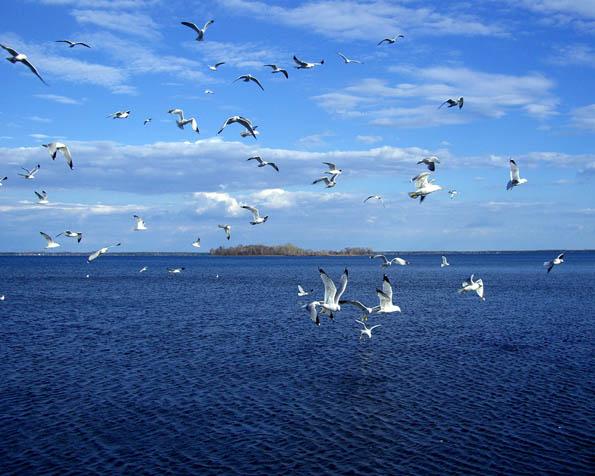 Obrázek na plochu v rozlišení 1280 x 1024 - Volní jako ptáci