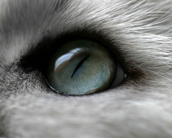 Obrázek na plochu v rozlišení 1280 x 1024 - Kočičí oko v detailu
