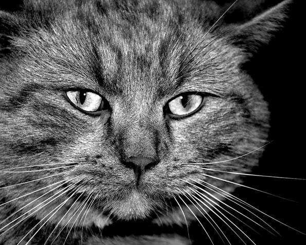 Obrázek na plochu v rozlišení 1280 x 1024 - Moudrá kočka