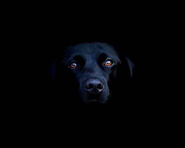 Obrázek na plochu v rozlišení 1280 x 1024 - Hlava černého psa