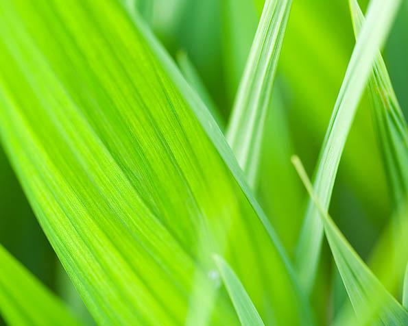 Volba: tapeta v rozlišení 1280 x 1024 - Zelená harmonie