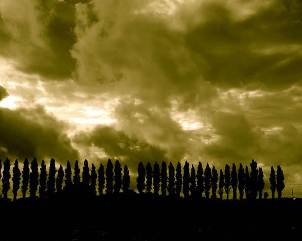 Obrázek na plochu v rozlišení 1280 x 1024 - Bloudící bouře přes stromy