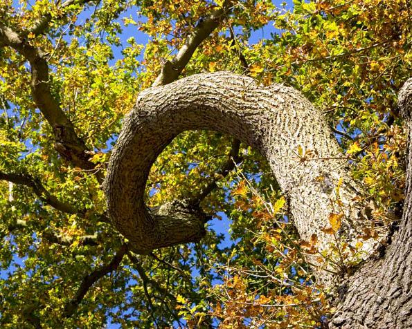 Obrázek na plochu v rozlišení 1280 x 1024 - Podivné zkřivení větve stromu