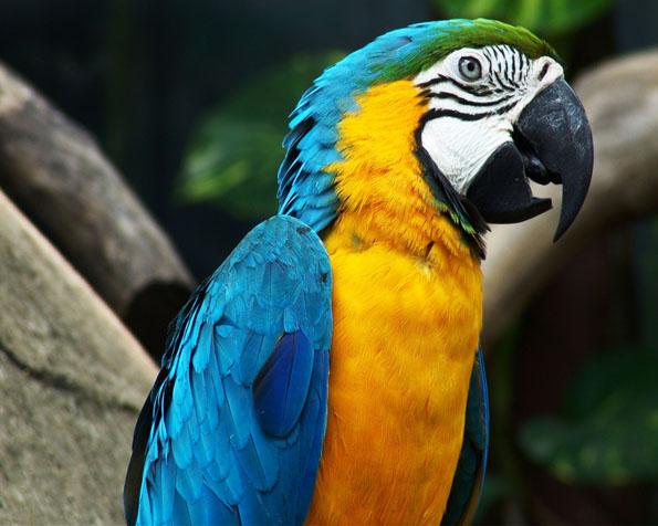 Obrázek na plochu v rozlišení 1280 x 1024 - Opravdu úžasný papoušek
