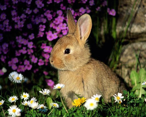 Obrázek na plochu v rozlišení 1280 x 1024 - Malý zajíček mezi květinami