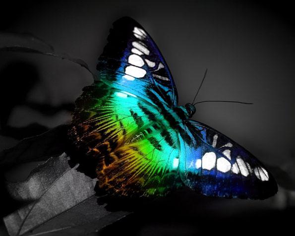 Obrázek na plochu v rozlišení 1280 x 1024 - Pestrobarevný motýlek