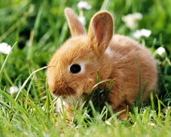 Obrázek na plochu v rozlišení 1280 x 1024 - Malý zajíček v trávě