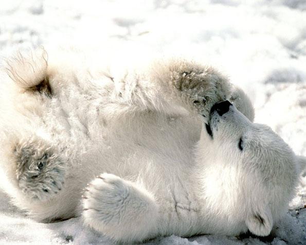 Obrázek na plochu v rozlišení 1280 x 1024 - Mládě ledního medvěda