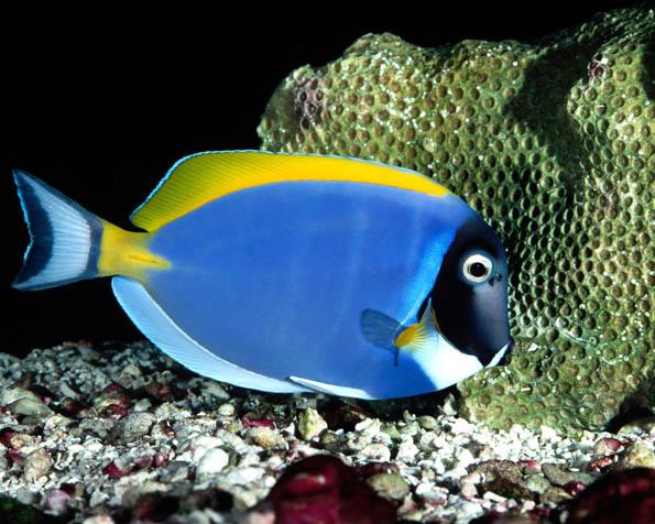 Volba: tapeta v rozlišení 1280 x 1024 - Mořská pestrobarevná rybka