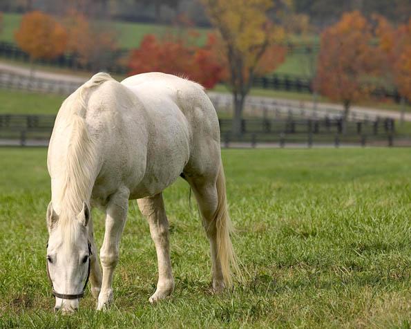 Obrázek na plochu v rozlišení 1280 x 1024 - Na pasece se pase bílý kůň