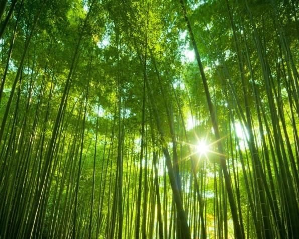 Obrázek na plochu v rozlišení 1280 x 1024 - Japonský bambusový les