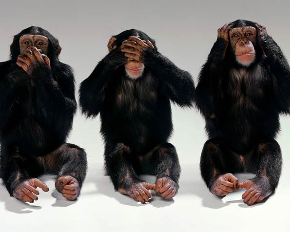 Obrázek na plochu v rozlišení 1280 x 1024 - Tři šimpanzí bráchové
