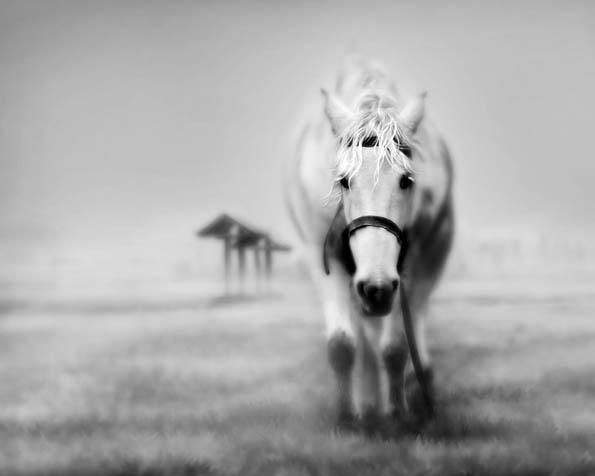 Volba: tapeta v rozlišení 1280 x 1024 - Andělský kůň