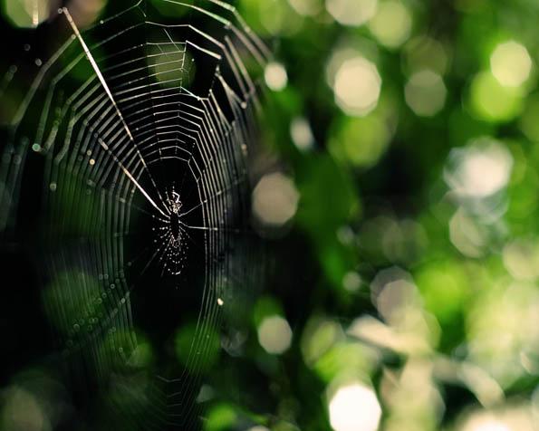 Obrázek na plochu v rozlišení 1280 x 1024 - Porušená pavučina