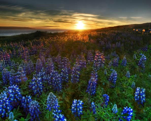 Volba: tapeta v rozlišení 1280 x 1024 - Květinový západ slunce