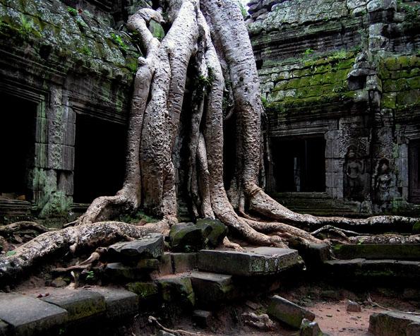 Obrázek na plochu v rozlišení 1280 x 1024 - Úžasný kmen stromu