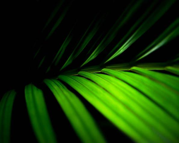 Obrázek na plochu v rozlišení 1280 x 1024 - Odvrácená strana palmového listu
