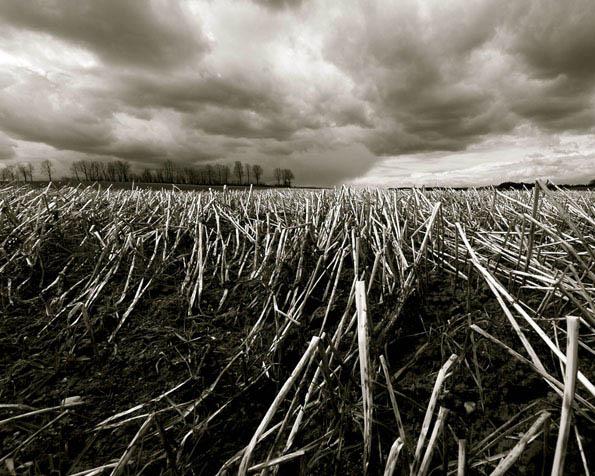 Obrázek na plochu v rozlišení 1280 x 1024 - Černobílé posečené pole