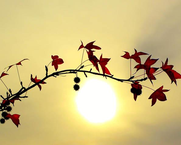 Volba: tapeta v rozlišení 1280 x 1024 - Větvička stromu před západem slunce
