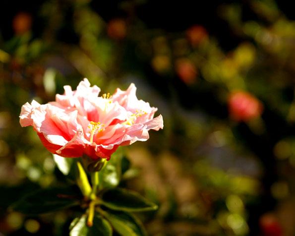 Volba: tapeta v rozlišení 1280 x 1024 - Krásná květina v detailu