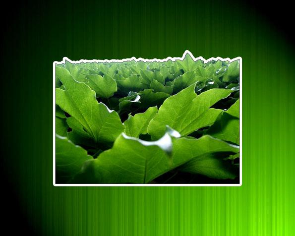 Tapeta na plochu pc: zelené osvěžení vaší pracovní plochy