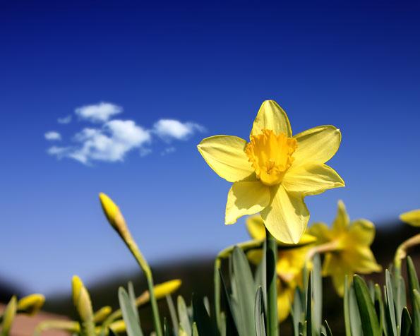 Obrázek na plochu v rozlišení 1280 x 1024 - Slunce v podobě květiny