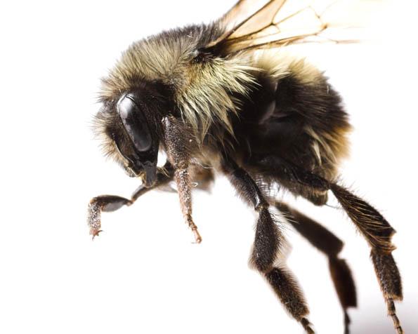 Obrázek na plochu v rozlišení 1280 x 1024 - Start včely v detailu