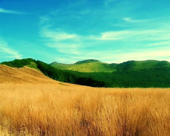 Obrázek na plochu v rozlišení 1280 x 1024 - Letní barvy osetého pole