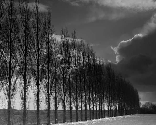 Obrázek na plochu v rozlišení 1280 x 1024 - Černobílá řada stromů