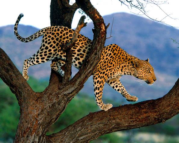 Volba: tapeta v rozlišení 1280 x 1024 - Gepard