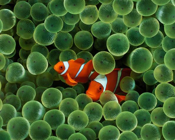 Volba: tapeta v rozlišení 1280 x 1024 - Hledá se Nemo