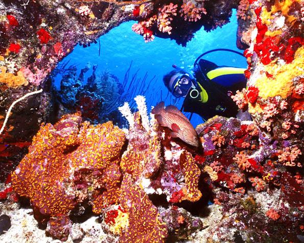 Obr�zek na plochu v rozli�en� 1280 x 1024 - Pot�p�n� na Antil�ch v Karibiku